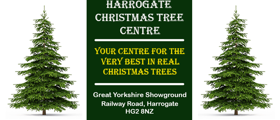 Where To Find A Real Christmas Tree In Harrogate
